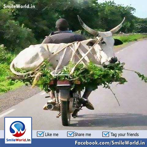 Indian Bike Transportation Funny Pictures