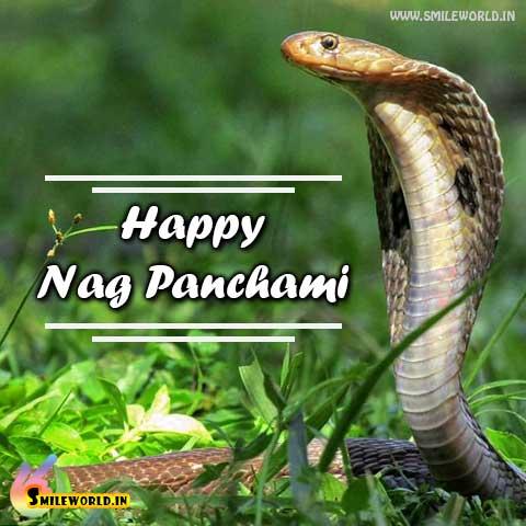 Happy Nag Panchami Picture Image Status