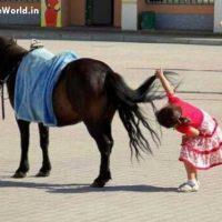 Cute Kids Funny Horse Photos for Whatsapp